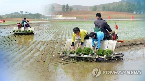 韩政府:朝鲜今年粮食缺口近70万吨