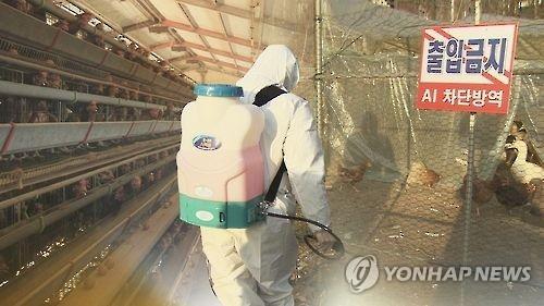 韩国将禽流感警报级别上调至最高级