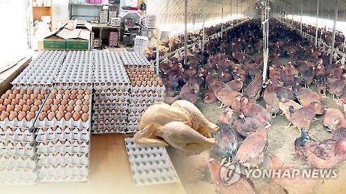 韩禽流感扩散 约3千万只家禽被扑杀