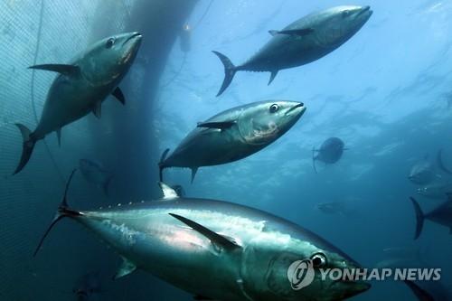韩去年水产出口额创近三年新高 归功金枪鱼紫菜