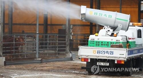 口蹄疫北上韩国首都圈 超百头奶牛被扑杀