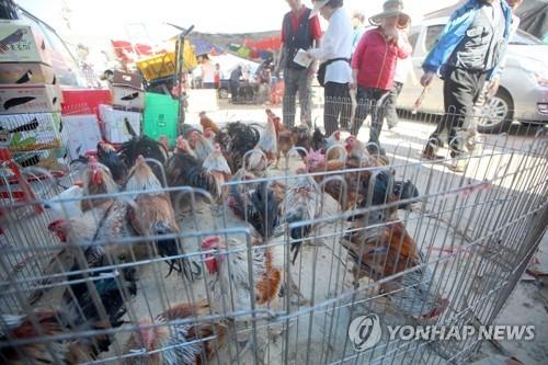 韩政府拟禁传统市场活鸡交易 - 1