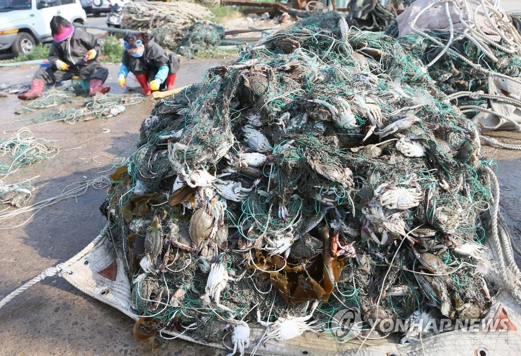 资料图片:6月30日,在仁川市瓮津郡一码头,渔民在收拾梭子蟹。(韩联社)
