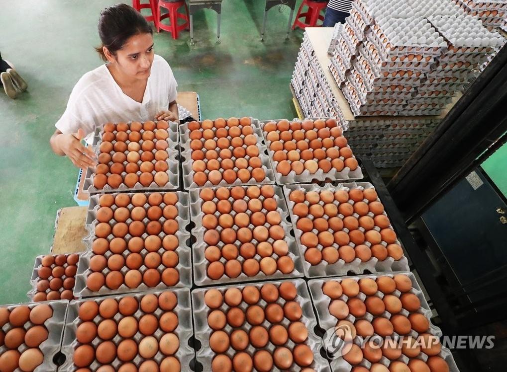 8月16日下午,在京畿道华城一蛋鸡养殖场,一员工正在作出库准备,该养殖场在杀虫剂成分调查中达标。(韩联社)