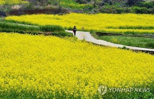 调查:10月黄金周韩三成民众计划出游 - 1
