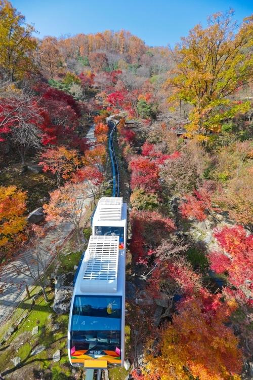 11月的一天,乘坐单轨列车穿过枫叶隧道。(韩联社记者成演在摄)