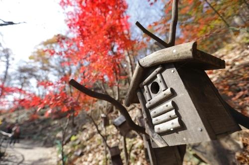 林间随处可见怡人小景。(韩联社记者成演在摄)