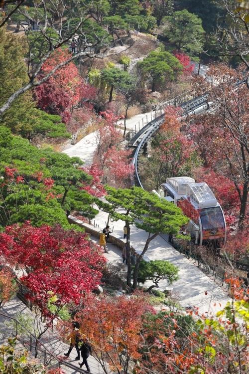 丹枫和青松相映成趣的松树园林。(韩联社记者成演在摄)