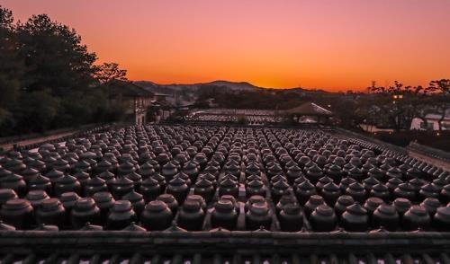 安城市农园里壮观排列的酱缸(韩联社记者成演在摄)