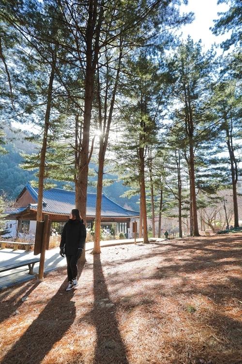清凉感四溢的晨静树木园内部(韩联社记者成演在摄)