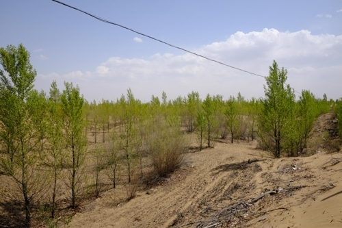 造林后的库布齐沙漠(山林厅提供)