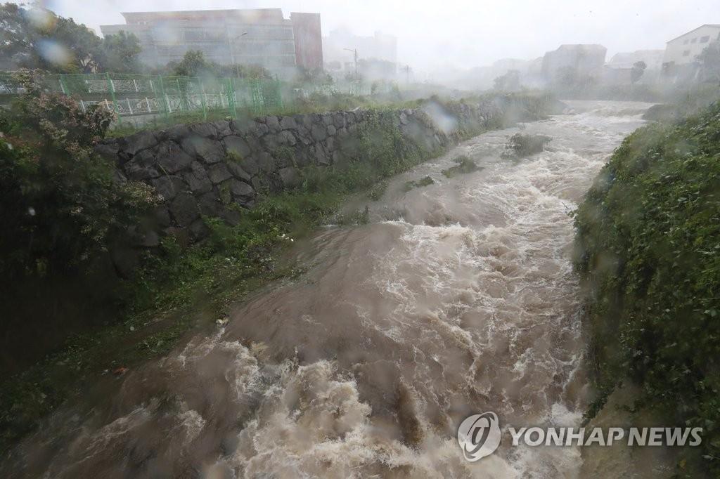 """8月23日,第19号台风""""苏力""""登陆韩国济州。济州市我罗洞平日几近干涸的一处江河受台风影响水位猛涨水流湍急。(韩联社)"""