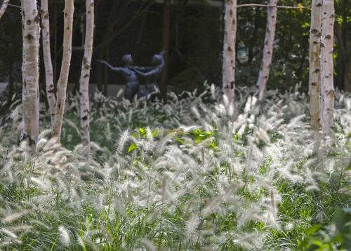 画廊前的白桦林和狗尾草(韩联社记者成演在)