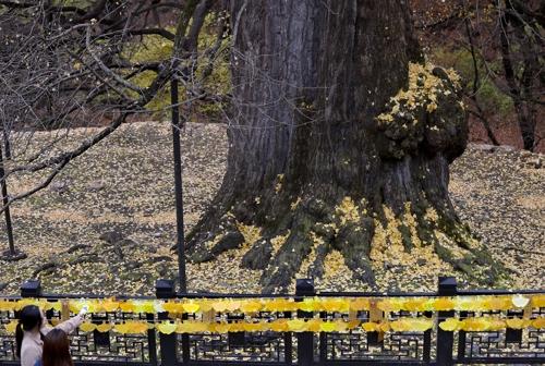 千年银杏树前忙自拍。(韩联社记者成演在摄)