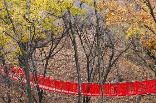 休息公园索桥(韩联社记者成演在摄)