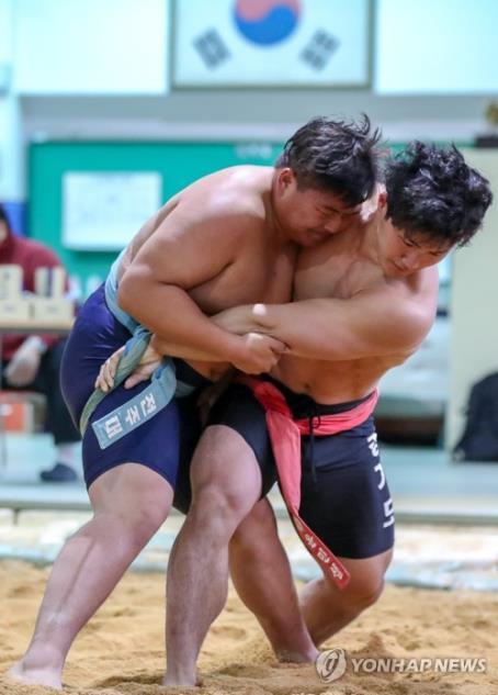 韩朝传统摔跤(韩联社)