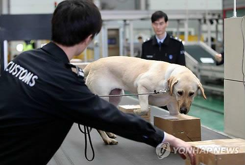 资料图片:2015年7月,在仁川机场,一只缉毒犬在查毒。 韩联社