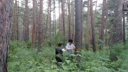 韩考察朝中边境树种筹备韩朝山林合作