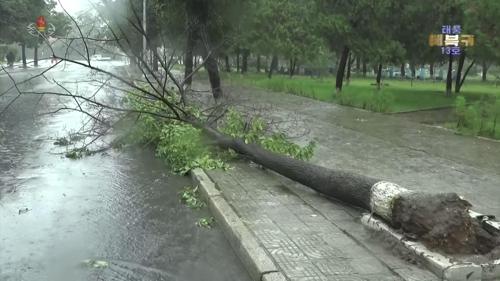 台风刮倒树木 韩联社/朝鲜中央电视台(图片仅限韩国国内使用,严禁转载复制)