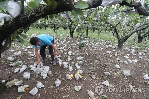 资料图片:农户受灾 韩联社