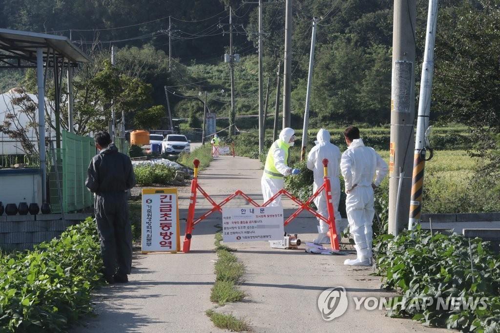 韩政府发布猪瘟防控对策下达家畜禁运令
