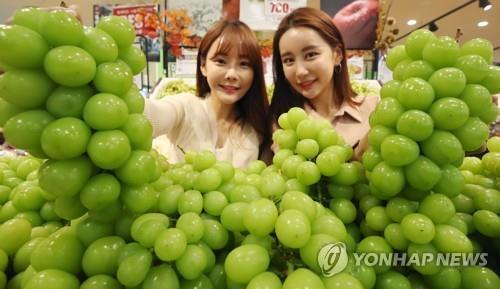 资料图片:香印青提 韩联社