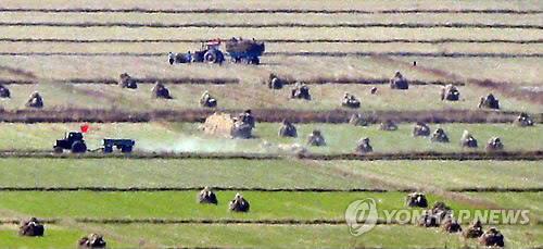 报告:朝鲜2019年粮食产量同比增2%