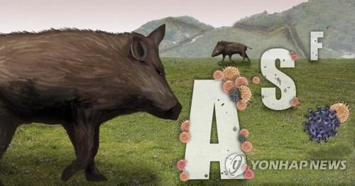 韩国边境发现3具感染非洲猪瘟野猪尸体