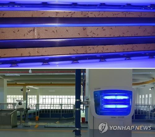 资料图片:图为在仁川市一处自来水厂发现的摇蚊成虫。 韩联社/议员李义相供图(图片严禁转载复制)