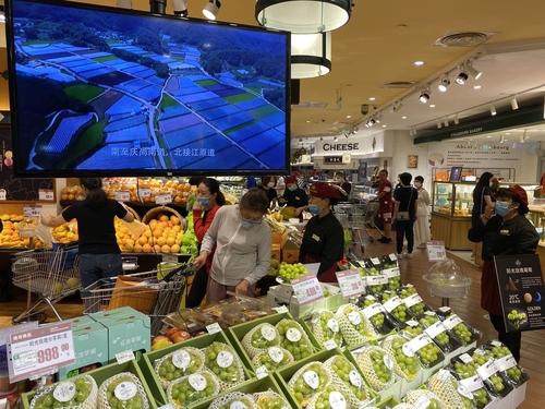 资料图片:走向中国高端水果市场的韩产阳光玫瑰葡萄 农水产食品流通公社供图(图片严禁转载复制)