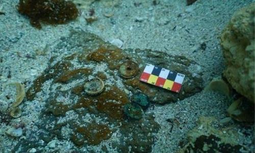 图为在济州道新昌里海域发现的中国古代硬币。 韩联社/国立海洋文化财研究所供图(图片严禁转载复制)
