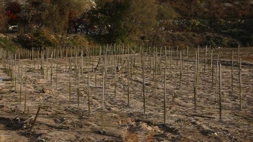 资料图片:遭受洪涝灾害的人参种植基地 韩联社