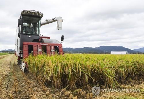 韩2020年米制食品出口同比增27%创新高