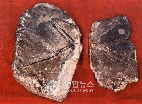 资料图片:这是朝鲜1989年在新义州发现的鸟类化石。 韩联社