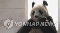 中国赠送的一对熊猫3月抵韩4月公开亮相