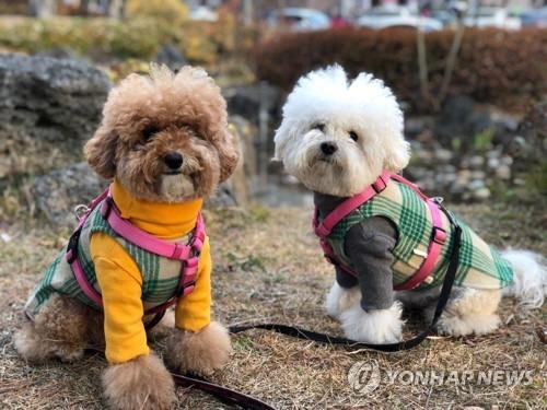 调查:韩国四分之一成年人养宠物