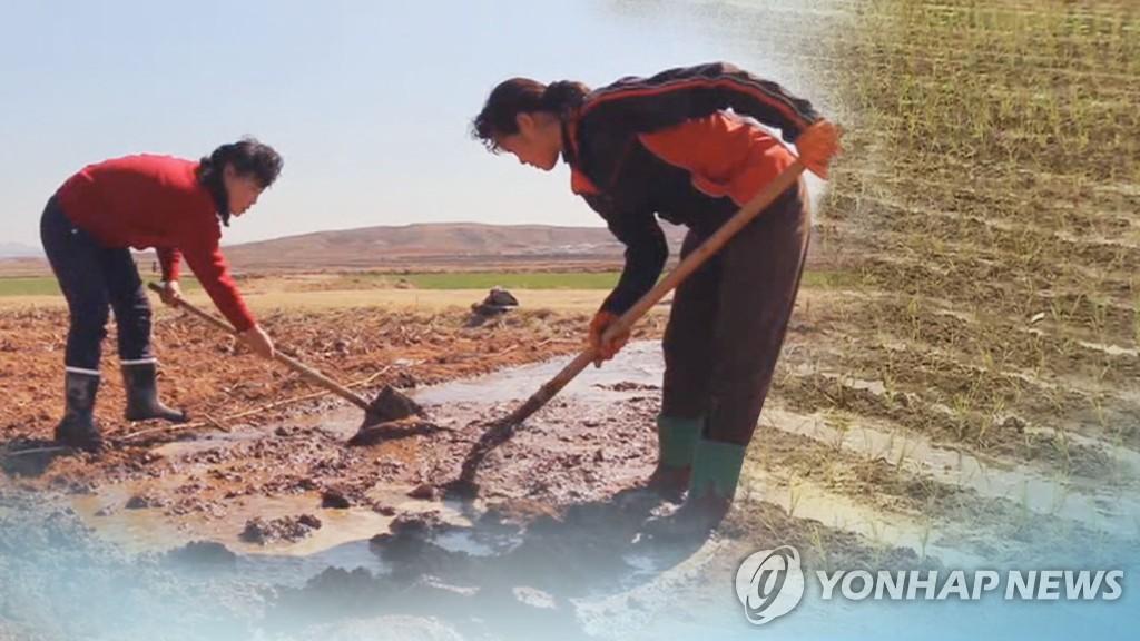 资料图片:朝鲜妇女种地。 韩联社