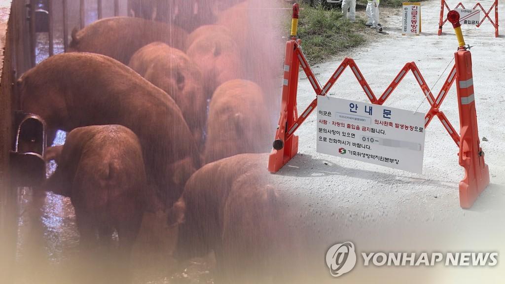 韩国又现非洲猪瘟疫情