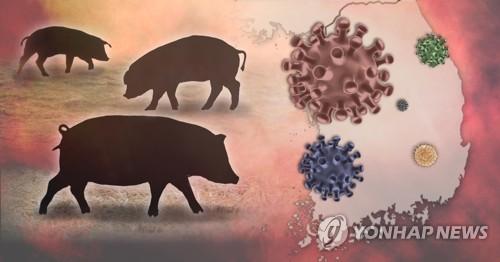 韩朝非军事区南侧野猪确诊感染非瘟