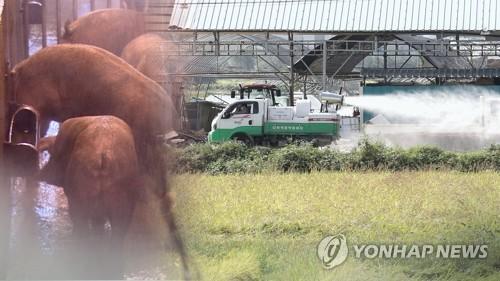 韩政府拟通过国际组织对朝鲜防控猪瘟提供援助
