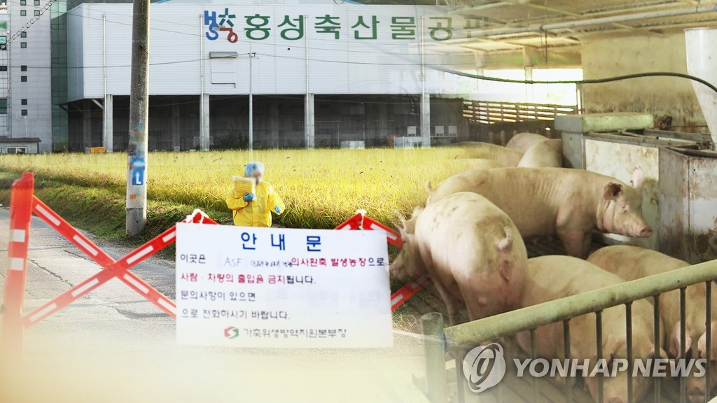 韩国非瘟发生半月:防疫力度大感染途径不明
