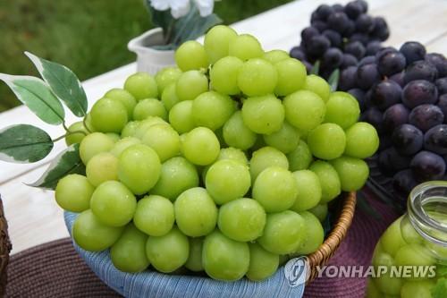 韩国葡萄今年前四个月出口同比猛增50%