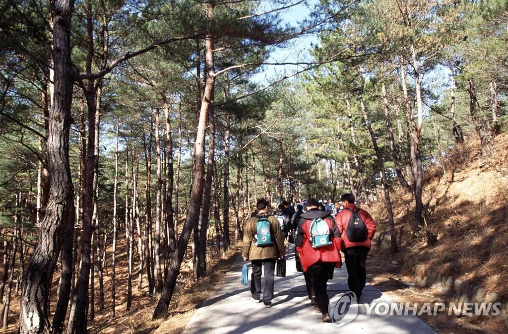 资料图片:金刚山登山路(韩联社)