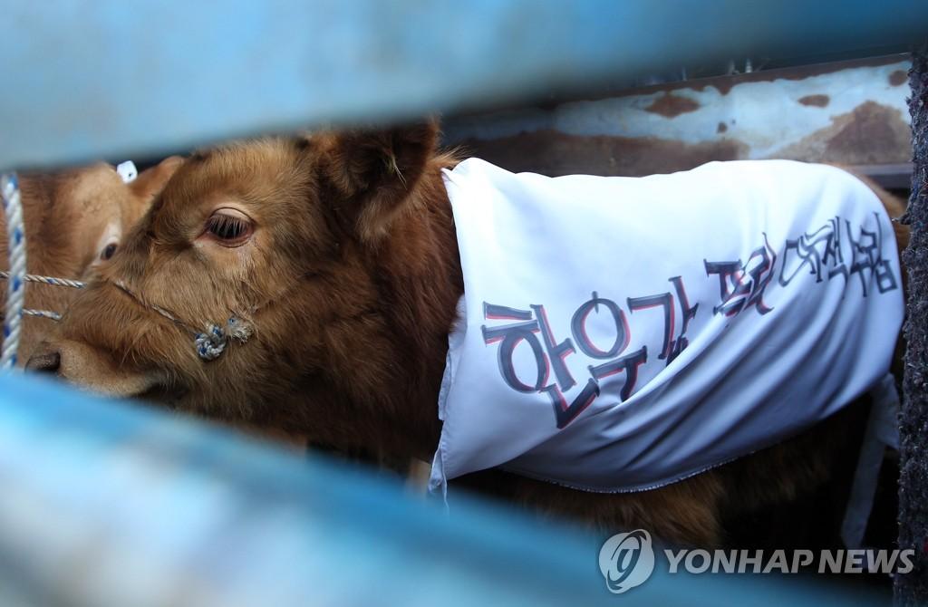 牛价大跌 农民举行示威