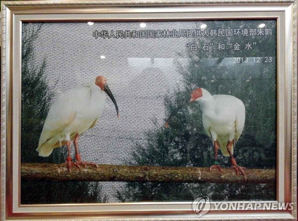两只中国朱鹮今晚抵达韩国