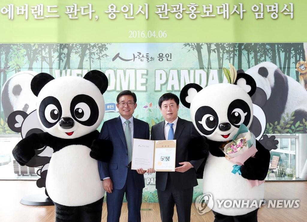 来龙仁旅旅游、看看熊猫