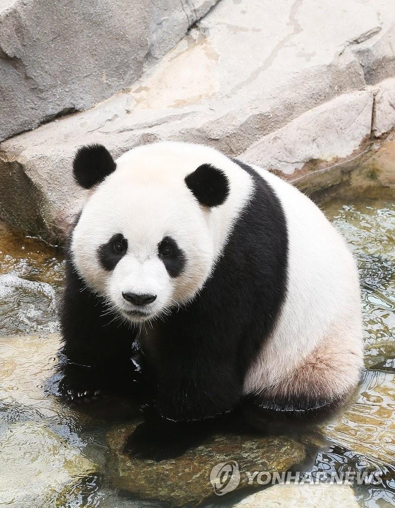 爱宝乐园首为旅韩熊猫庆生 特制三层蛋糕