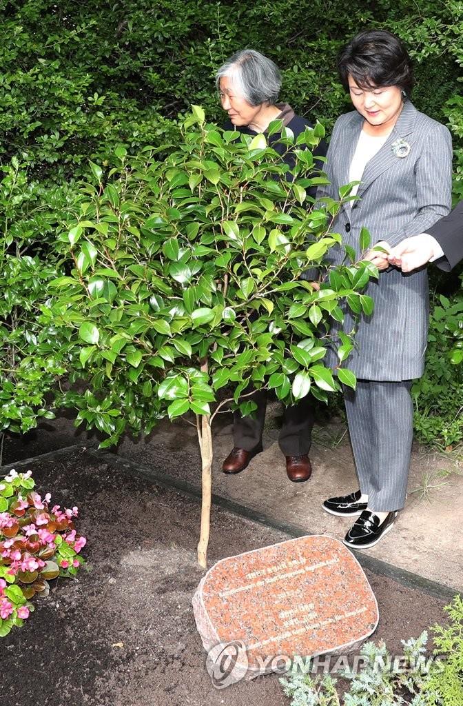 韩第一夫人带到德国的茶花树