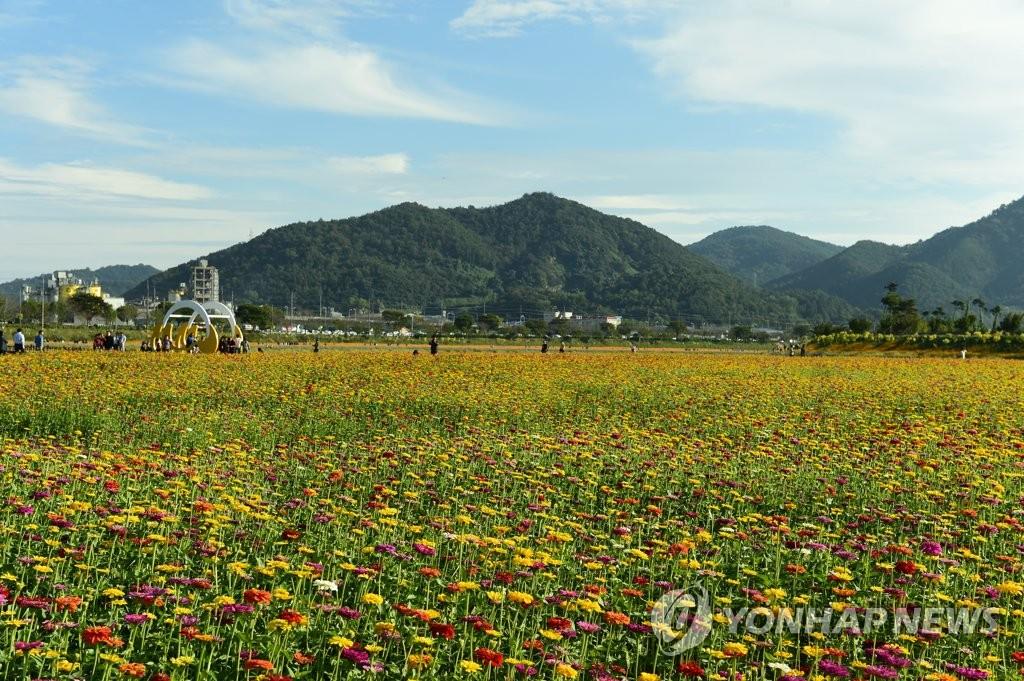 韩国黄龙江黄花节盛况空前