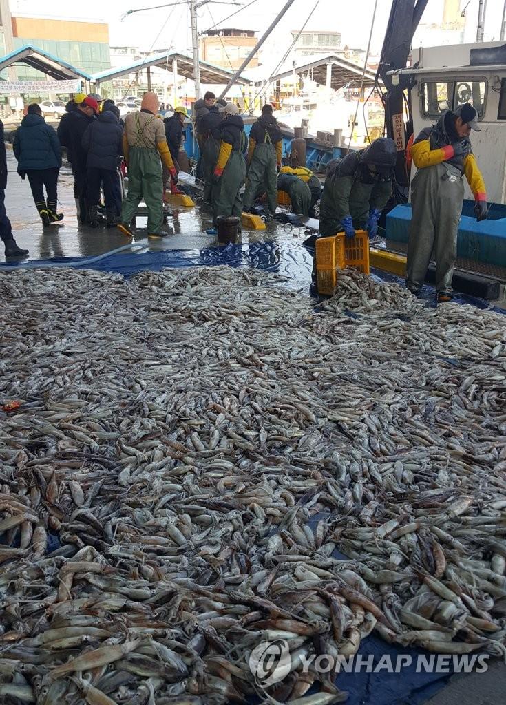 愿新年渔业丰收如今日
